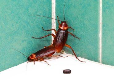 cockroach-exterminator.jpeg