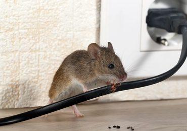 rodent exterminator services